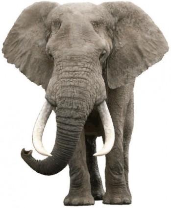 vecteur éléphant réaliste