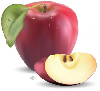 vectores realistas fruta