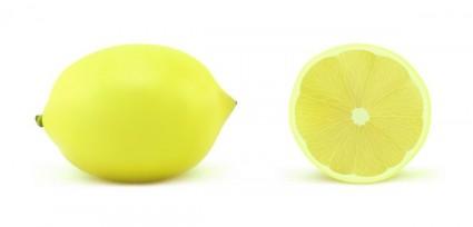リアルなフルーツ ベクトル