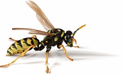 abelhas de insetos vetor realista