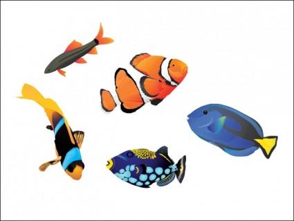 poissons d'eau salée