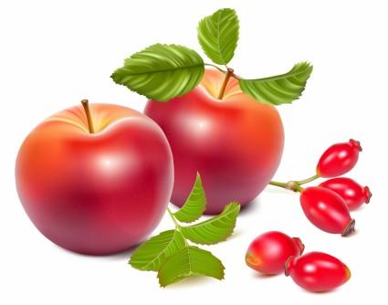 poires et pommes hyper-réalistes vector