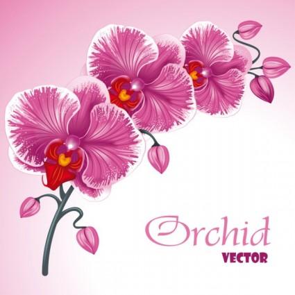 vector fondo de flores hermosas