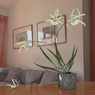 plants  /  orchids -10