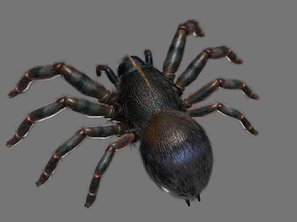 Black ants 3D models
