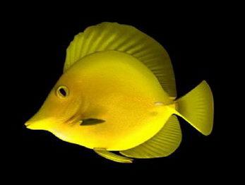 Deep Sea Fish Free Download