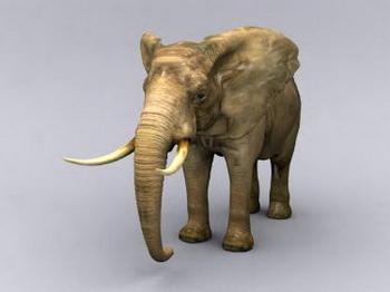 Fine elephant model