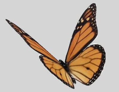 Multiple beautiful butterfly 3D Model