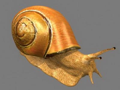 3D Model of Snail