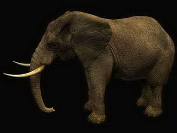 Animals, mammals, elephant ivory, the African elephant Asian elephant 3D Models