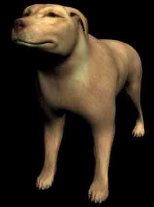 Animals canine dog dogs expensive yellow large yellow-dog hybrid dog pedigree dog dog 3D Models
