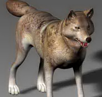 Animals wolf wolf fur gregarious canine dogs animals 3D Model of Wild Animals