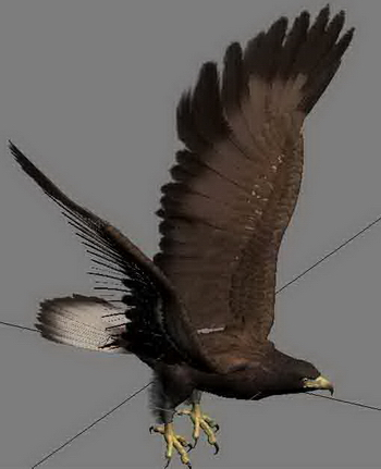 Animal eagle bird hunting goshawk attacks on 3D Model of glider flight