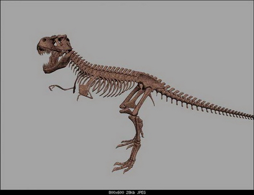 The Skeleton of Dinosaur
