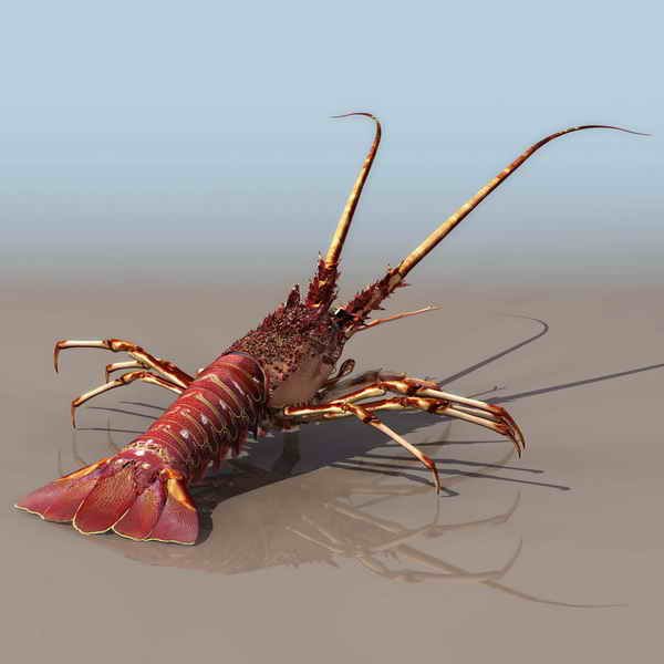 Lobster  animals   17