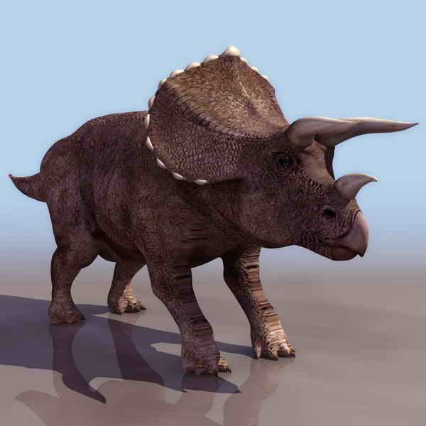 Rhino  animals  7