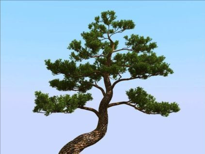 High precision Japanese pine trees