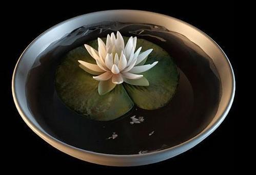Bonsai water lily