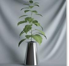 Plant Bonsai Series - Tony 3D model (including materials)