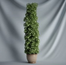 Plant Bonsai Series - 3D Model of vines (including materials)