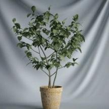 Plant Bonsai Series - small tree 3D models (including materials)