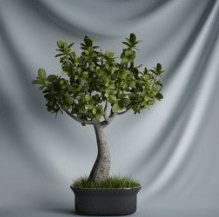 Plant Bonsai Series - 3D model of small trees (including materials)