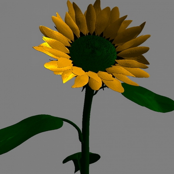 Sunflower 3D models (obj, mtl format)