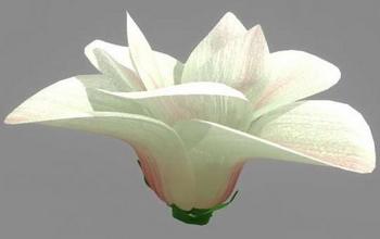 Magnolia 3D models (mb format, with map)