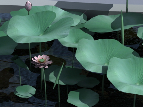 Lotus leaves, flowers