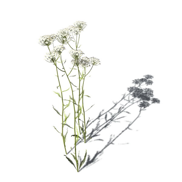 3dPlant 3d model/flowers  2-30