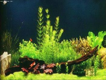 Style green aquarium fish tank map