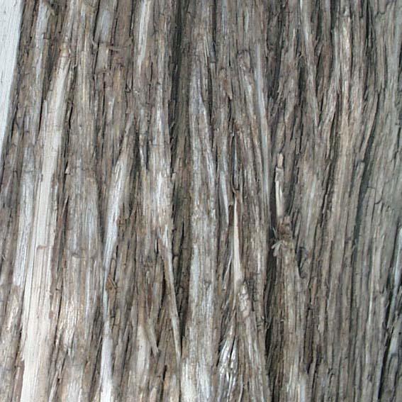 Classicals-Bark005(TIF File Types)