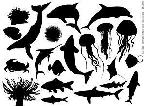 海洋生物の写真での材料の要素