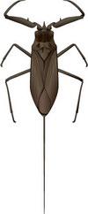 Изысканный насекомых-2