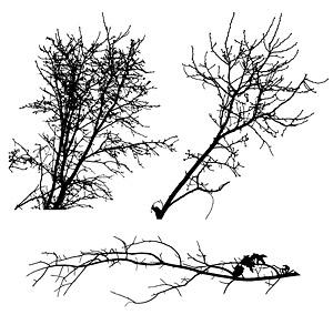 素材の枯れた枝