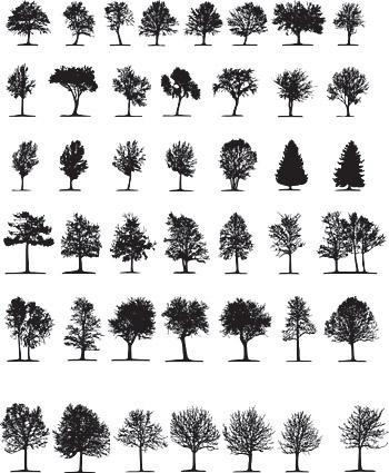 Элементы деревьев в картинках