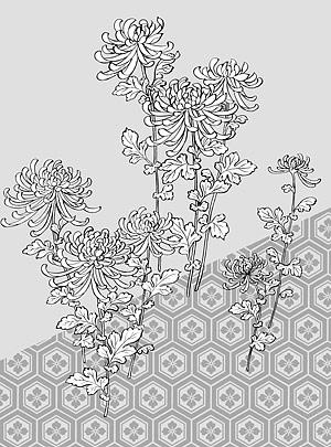 花 39(Chrysanthemum, background) のベクトル線の描画