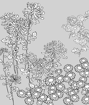 花 27(Wild chrysanthemum) のベクトル線の描画
