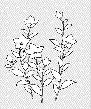 รูปวาดเส้นเวกเตอร์ของ flowers-28(Campanulaceae)