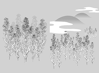 花 35(Cauliflower, clouds) のベクトル線の描画