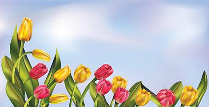 Tulipanes y el cielo