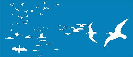 Aves de vectores de material