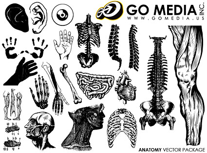 Go Media produced vector material - the human body parts and organs