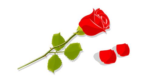 赤いバラの花と花びら