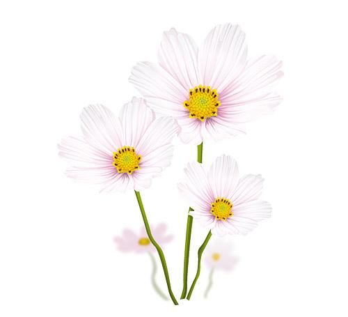Les fleurs blanches élégants vecteur matériel