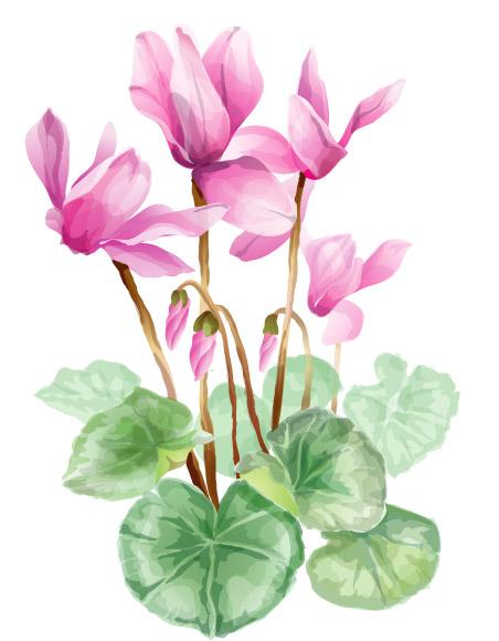 ดอกไม้ที่สวยงามและเวกเตอร์วัสดุ