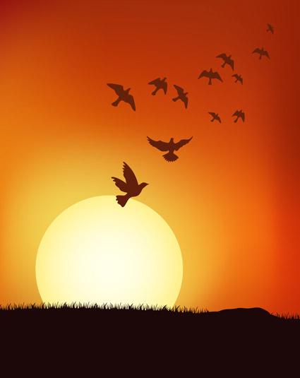 las poblaciones de aves en el atardecer de vectores de material