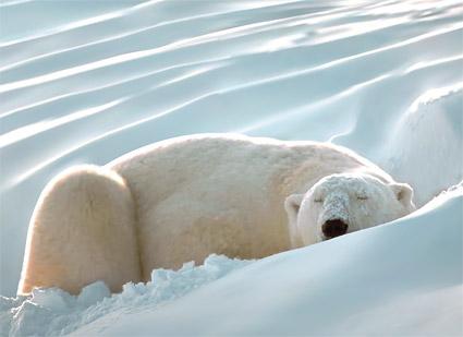 인공 지능 북극곰 벡터 자료의 현실적인 렌더링