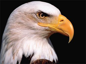 Representación realista de AI del águila