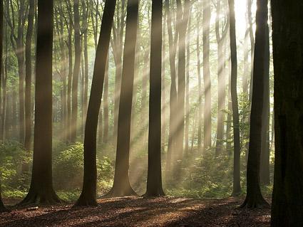 ป่าภาพคุณภาพวัสดุ